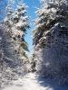 Fotograficzny konkurs zimowy